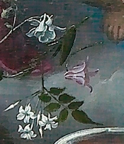 fiore-aquilegia